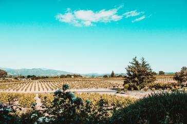 chloe-jackman-photography-winery-lifestlye-photos-2018-713